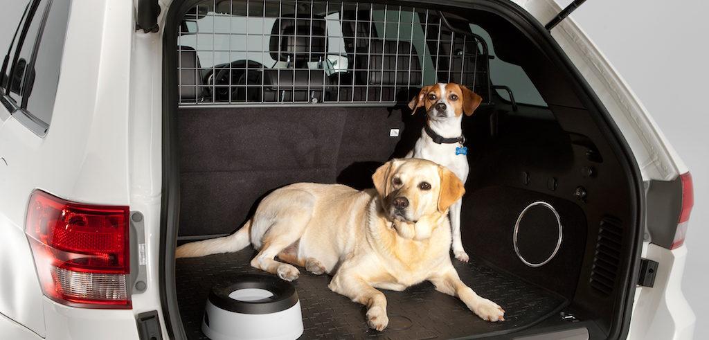 como-transportar-a-perros-y-gatos-en-coche